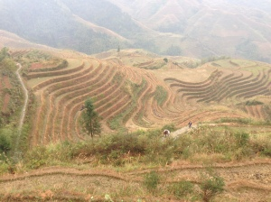 rice terrace 2