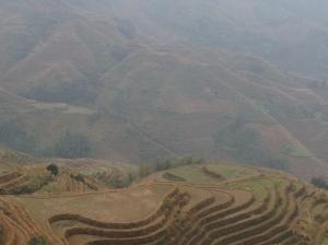 rice terrace 4