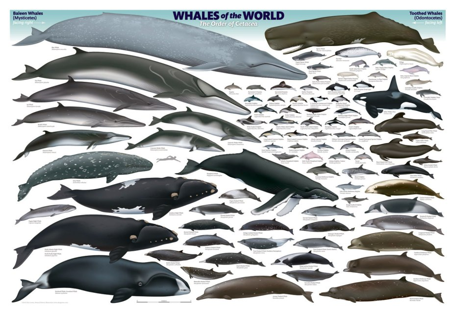 whales_of_the_world