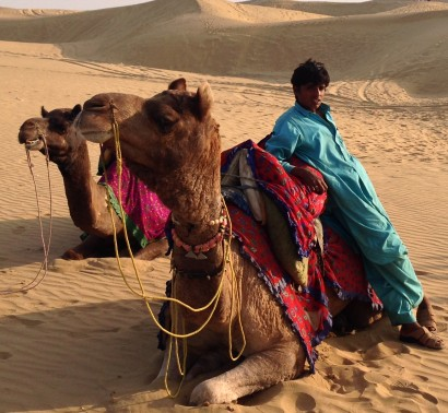 Camels plus Driver in the Jaisalmer Desert