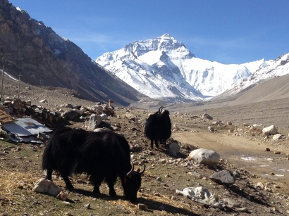 Mt Everest plus Yaks