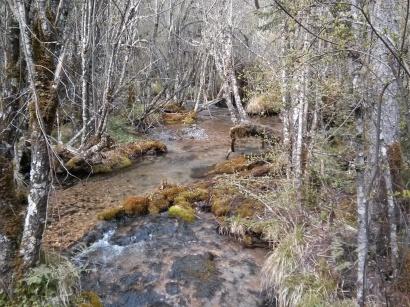 Jiuzhaigou stream