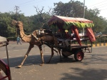 Camel cart (2)